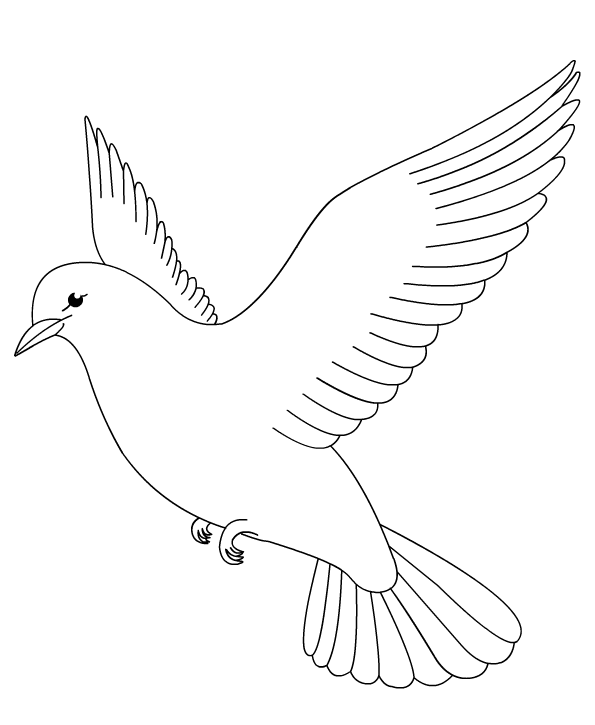 color a dove - Bird Coloring Book