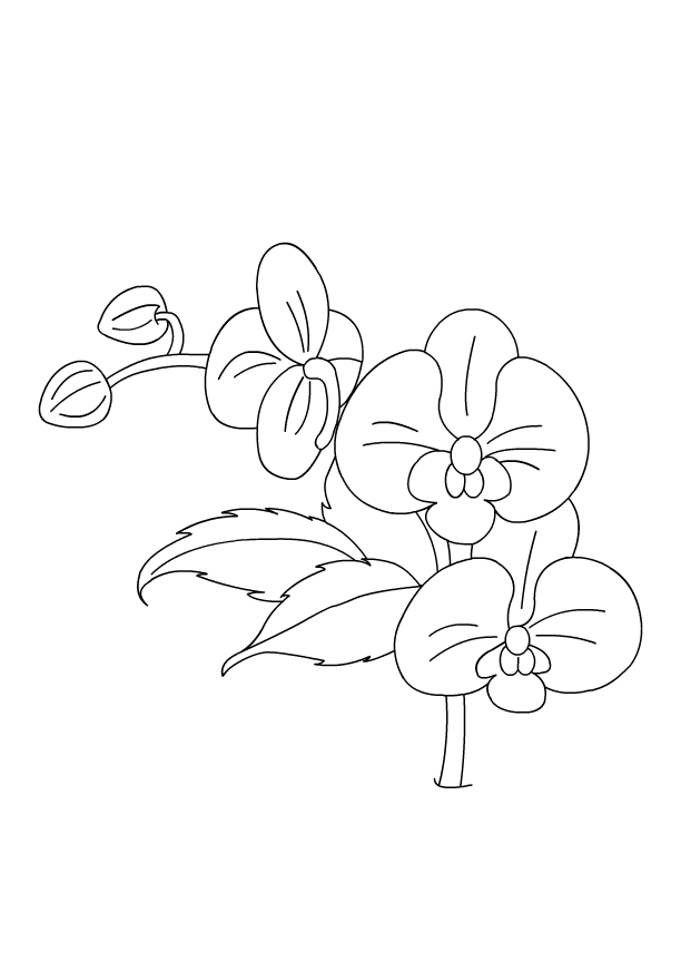 Flower Coloring Pages | Color Orchid