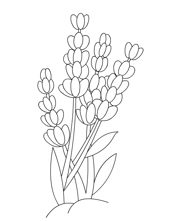 Flower Coloring Pages For Children | Color Lavender
