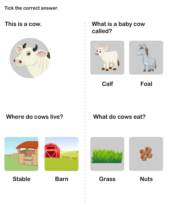 Learn about Farm Animal - Cows | Farm Animals Worksheet