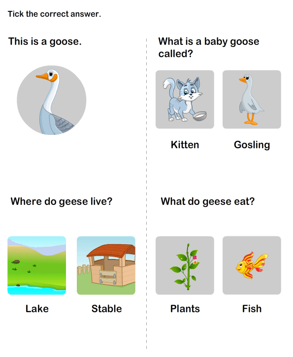 Farm Animals Pictures for Kids – Farm Animals Worksheets for Kindergarten