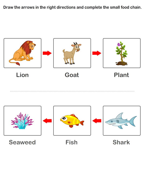 Food Chain Worksheets Free Educational For Kids. Food Chain Worksheet 12. Worksheet. Food Chain Worksheet Answers At Clickcart.co