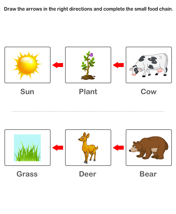 Free Printable Kindergarten Worksheets | Worksheets On Food Chain