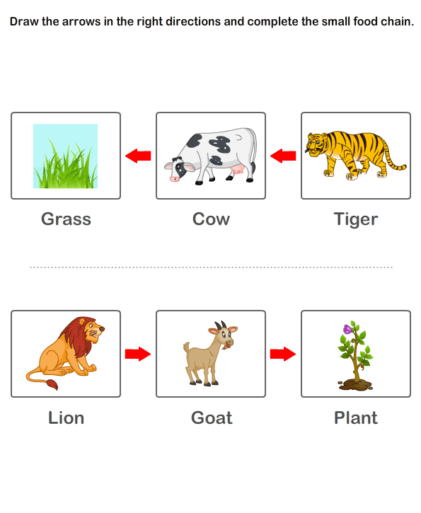 Print Free Worksheet of Food Chain | Online Learning ...