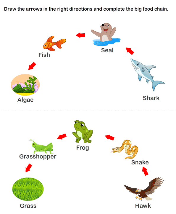 Marine Animals Worksheet | Free Printable Math Worksheets - Mibb ...