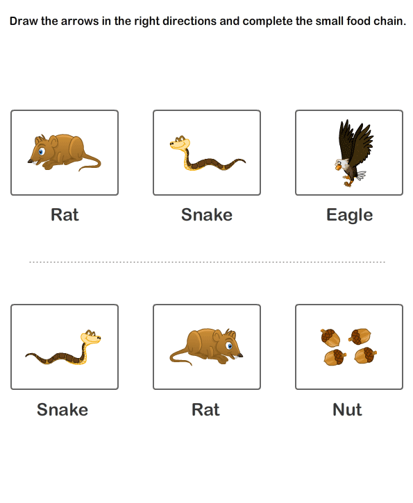 Food chain worksheets