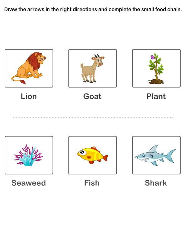 Ecosystem+Worksheet+Food+Chain marine food chain worksheet food chain ...