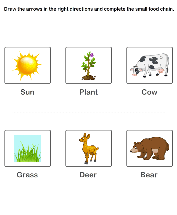 Free Printable Kindergarten Worksheets – Food Chains Worksheet