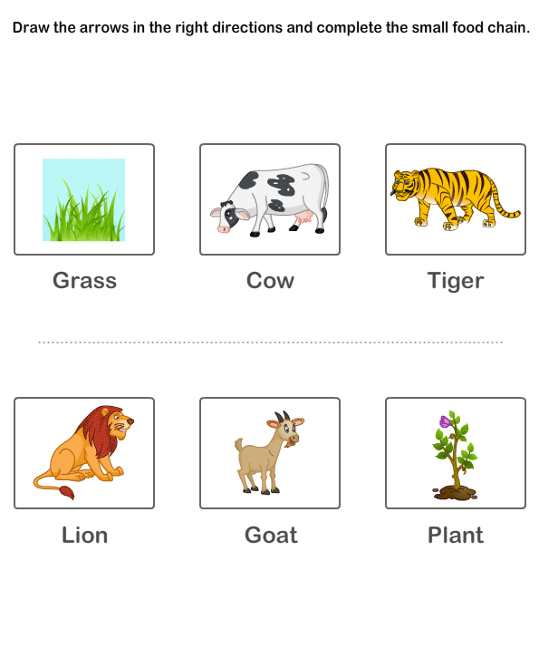 Worksheet of Food Chain | Online Learning Educational Kids Worksheets ...