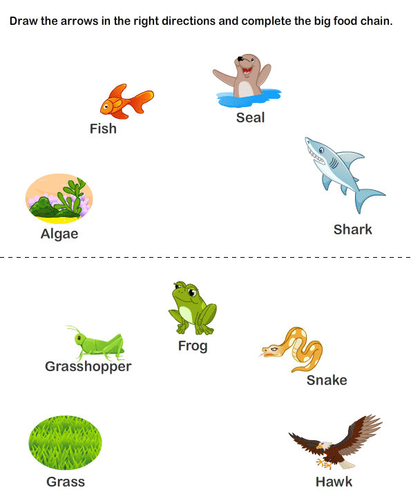 ... Food Chain Worksheets | Worksheet To Learn | Kids Games And Worksheets
